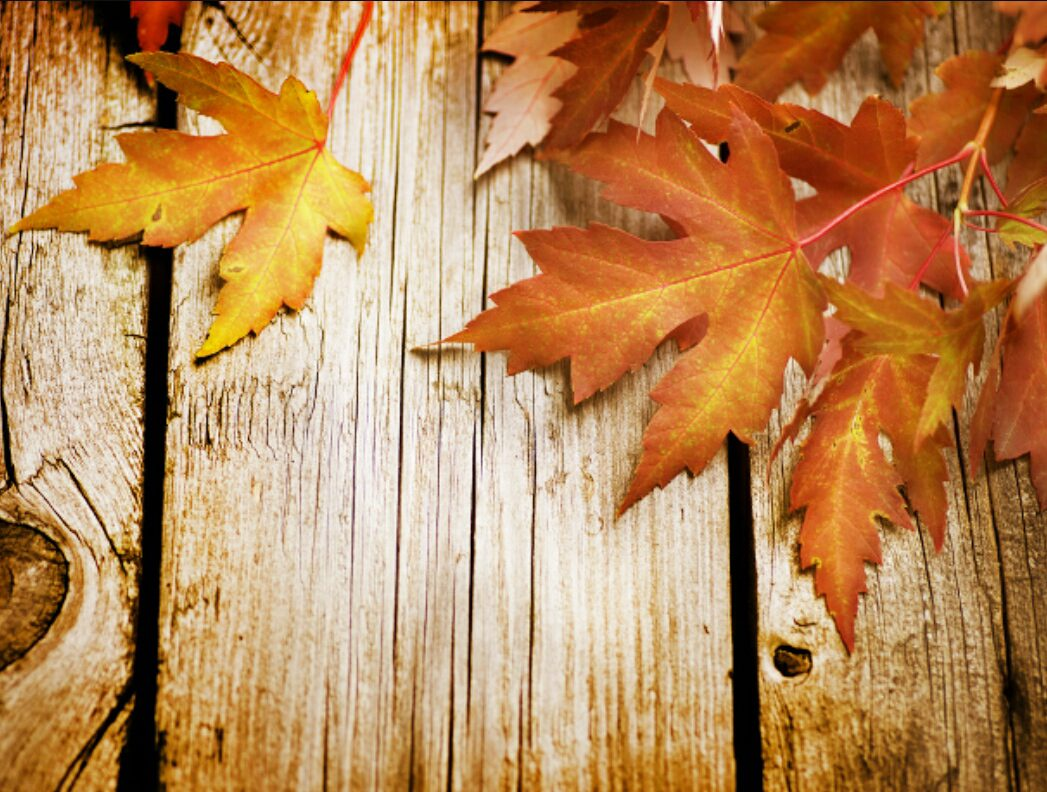 Friday fall Home Decor Favorites